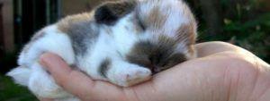 Кролики охотно идут на руки