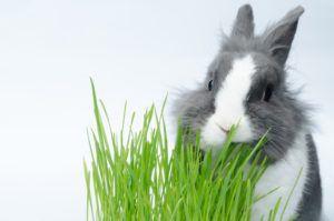 Корма для кроликов: виды, состав и суточные нормы