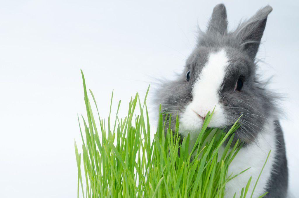 Трава - еще один необходимый элемент рациона кролика