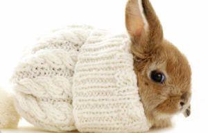 Кролики боятся сквозняков