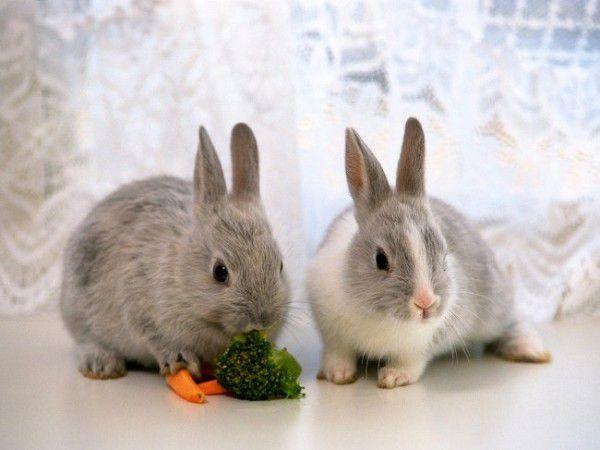 Овощи в рационе кролика