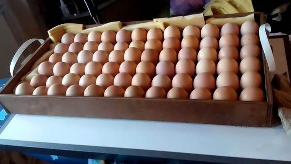 Подготовка к инкубации