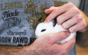Кролик вам доверяет, если спокойно сидит у вас на руках
