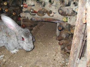 Возвращаем кроликов в жилище