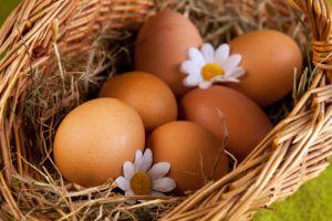 Яйца данной породы отличаются крупным желтком