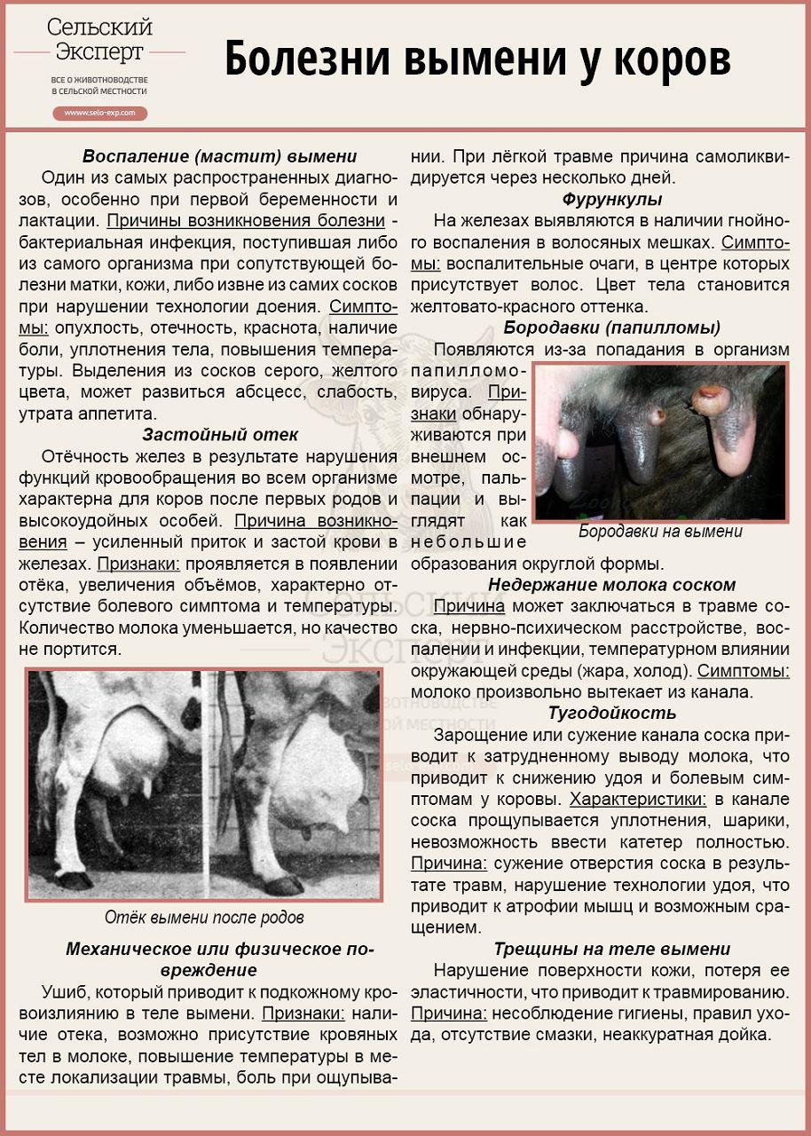 Болезни вымени коров