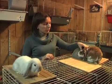 В хорошем питомнике занимаются разведением 1-2 пород карликовых кроликов