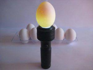 Для закладки нужны только свежие качественные яйца