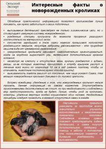 Интересные факты о новорожденных кроликах