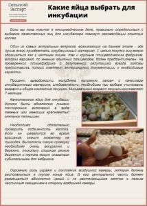 Какие яйца выбрать для инкубации