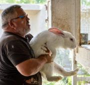 Как забить кролика?