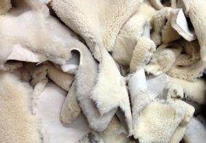 Шкурки новорожденных ягнят
