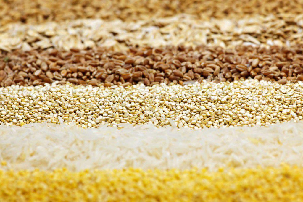 Основа кормления перепелов зимой - зерно