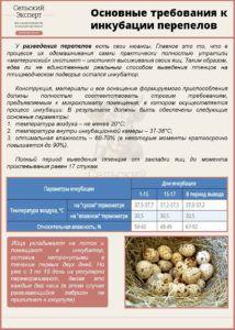 Основные требования к инкубации перепелов