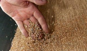 Перебор зерна