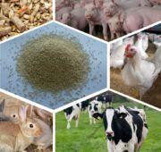 Показатели конверсии зависят от рациона животных