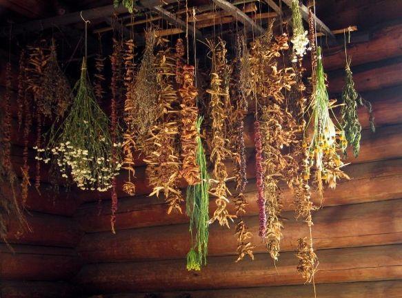 Предварительно заготовленные сушеные травы помогут пережить зиму