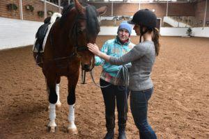 Первое знакомство с лошадью