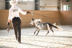 Частое использование хлыста может привести лошадь в состояние сильнейшего испуга