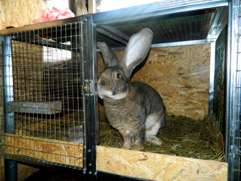 Перед забоем кролика отсаживают в отдельную клетку