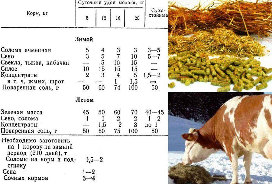 Сезонные особенности формирования рациона для коров