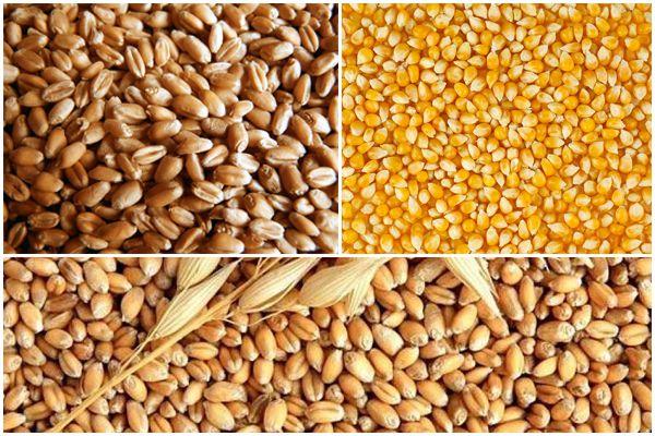 Смесь пшеницы, кукурузы и ячменя