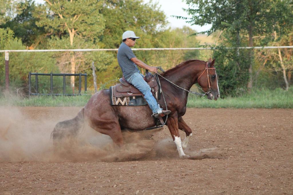 Техника осаживания лошадей