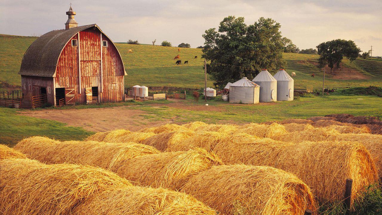 Фермеру важно правильно рассчитывать показатели кормовой конверсии и работать над их улучшением