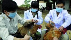 Консультация с ветеринаром и использование рекомендованных препаратов позволит сохранить здоровье всего поголовья.
