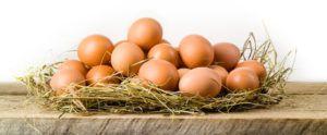 Характерный коричневатый цвет яиц нью-гемпширских несушек