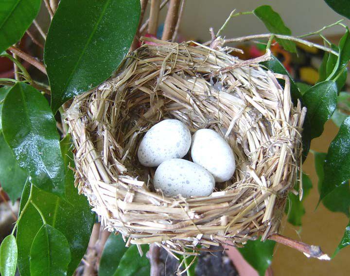 Птичье гнездо