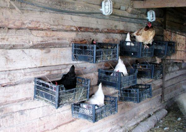 Куриное гнездо из ящиков