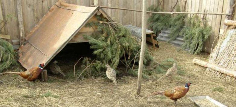 Гнездо для фазана