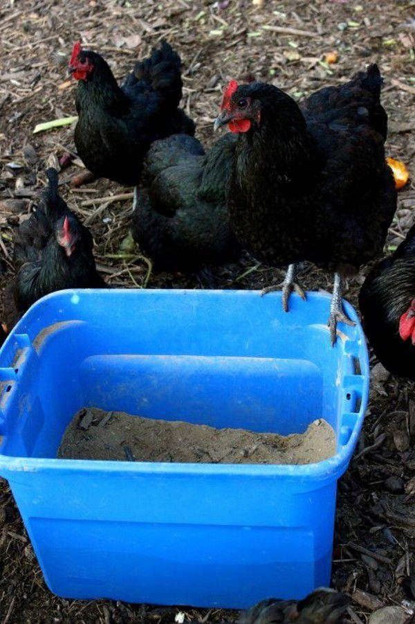 Зольные ванны для кур
