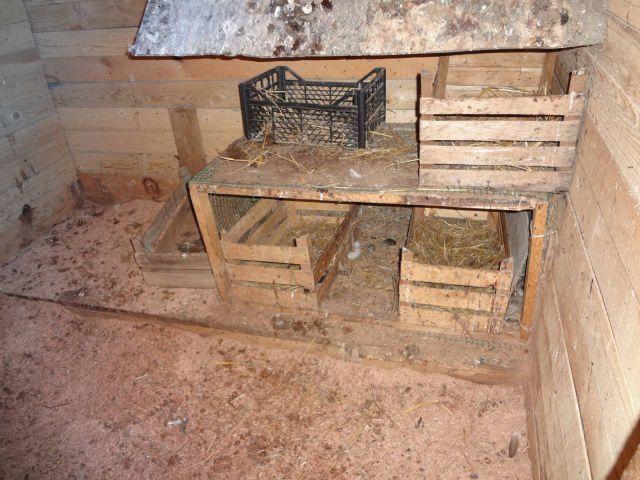 Гнездо из ящиков для индюков