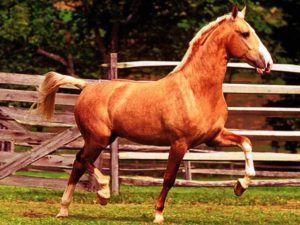 Задние копыта лошади меньше передних