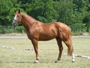 Здоровая стойка лошади