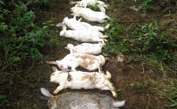 Кроликов можно забить кровным и бескровным методами