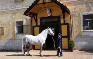 Кладрубы стали королевскими лошадьми