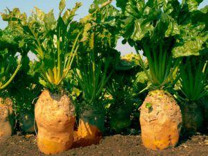 Конец вегетации