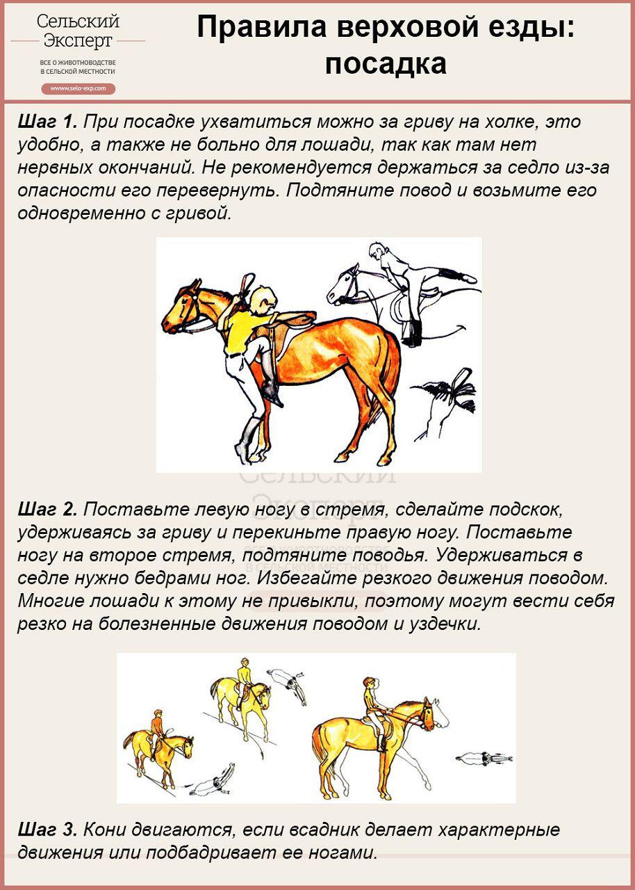 Правила посадки на лошадь