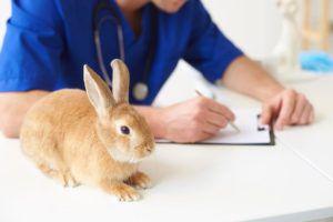 Ветеринарный осмотр должен быть систематическим