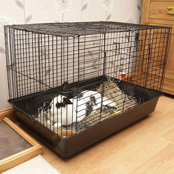 Лучшим вариантом размещения кроликов в клетках будет одиночное содержание животных