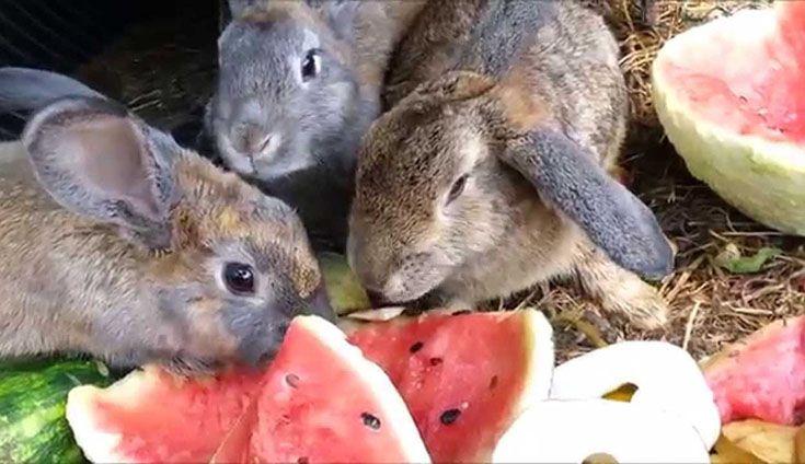 Свежие овощи и фрукты – обязательная составляющая дневного рациона для кроликов