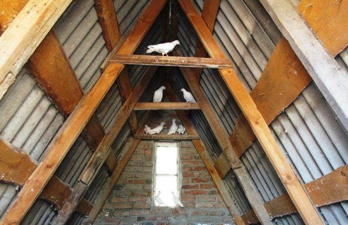 Окна в голубятне располагают с восточной или южной стороны