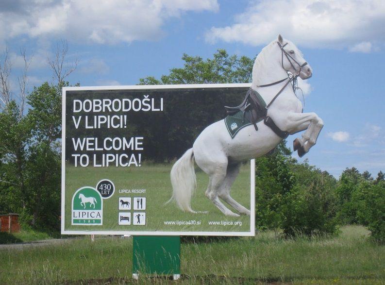 Липицианский конный завод (Словения)