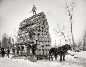 Пара тяжеловозов тянет 42,3 тонны бревен. США, 1893 г.