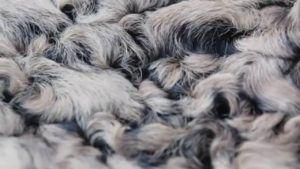 Шерсть каракульских овец