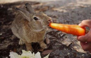 Морковь – приятный гостинец с фермерского огорода