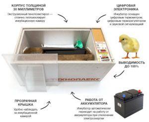 Описание инкубатора
